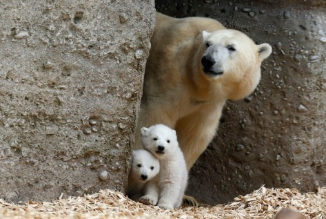 http://time.com/88355/mothers-day-2014-animal-moms/
