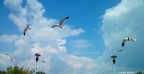 Spot Jonathan Livingston Seagull