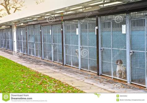 Source: https://thumbs.dreamstime.com/z/dog-pound-cages-homeless-dogs-35843262.jpg